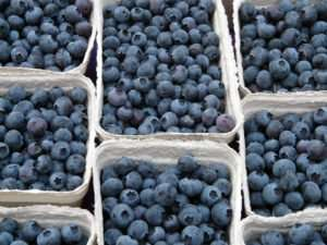 July 30, 2016 - Celebrate the Blueberry at Craftsbury Farmers Market