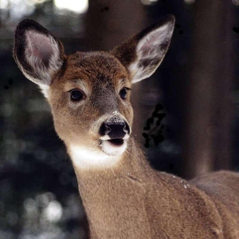 Vermont Animal Whisperer - Donna Underwood Owens