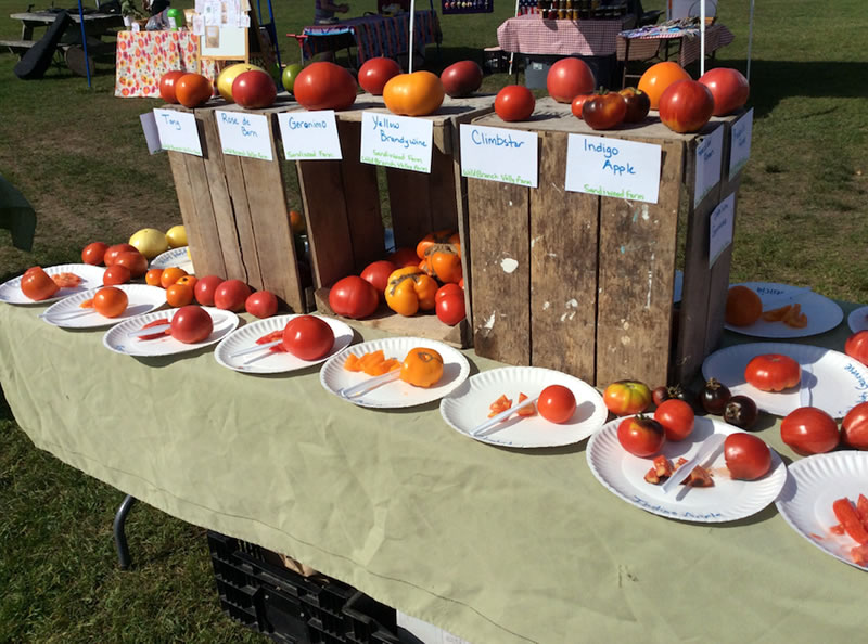 Over thirty tomato varieties to taste test at the Craftsbury Farmers' Market